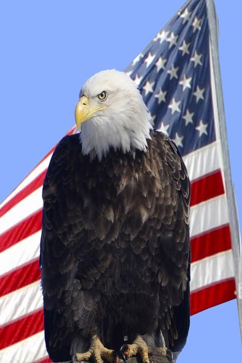 eagle and flag 2019